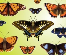 Realistic Butterfly design vectors