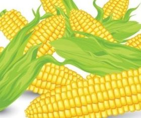 Vivid corn vector