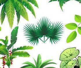 Various Jungle Plants vector