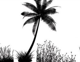 Coconut tree silhouette vector
