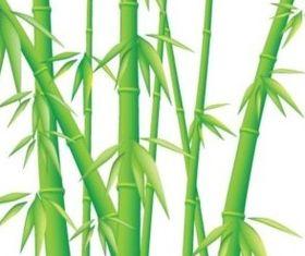 shiny Bamboo design vector