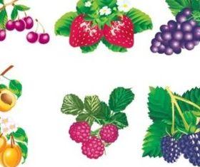 Various Vivid fruit vector