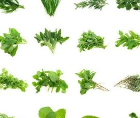 Bundles herbs creative vector
