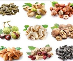 Nuts and Seeds vector