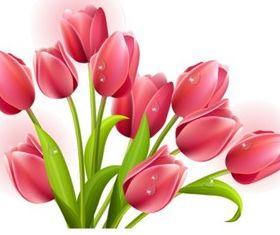 Elegant tulip vectors