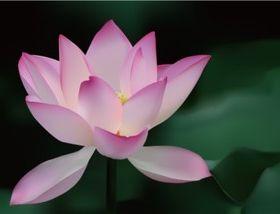 Bright realistic lotus vectors graphic