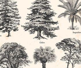 Drawn trees vectors graphics