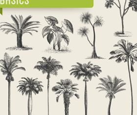 tropical plants vector set