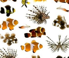 Exotic Fish Set vector