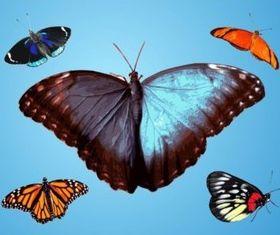 Butterflies Traces vector graphics