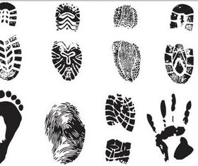 Different Fingerprint vectors graphics