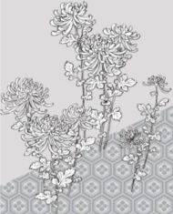 Hand drawn Chrysanthemum vector set