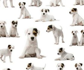 Cute White Puppy Illustration vector