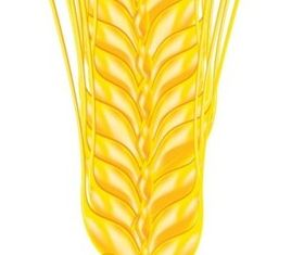 Shiny wheat vector