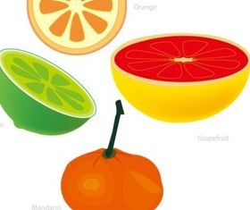 grapefruit and Orange shiny vector