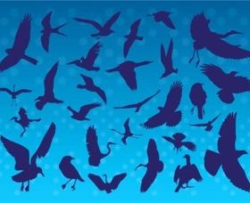 Flying Birds Silhouettes creative vector