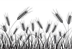 Wheat black silhouette vector