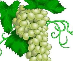 green grape vectors material