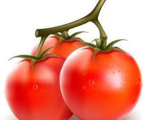 Vivid tomato and eggplant vector set