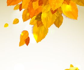 Autumn leaf and Sunlight background vector