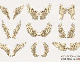 Wing vectors graphics