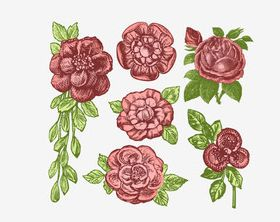 Retro rose vector set