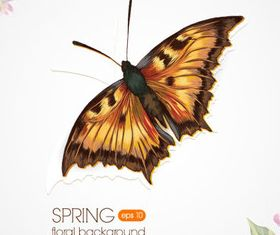 Butterfly Beautiful background 3 set vector