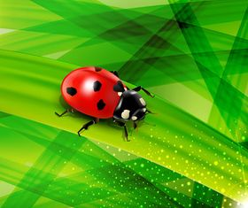 Ladybug green background design vector