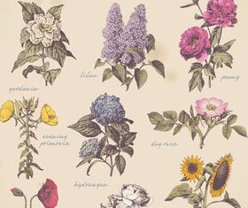 Old Style Garden Flowers vector
