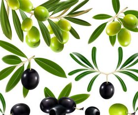 Vivid Olives 1 vector graphic