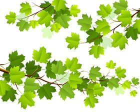 Green leaves set 1 vector