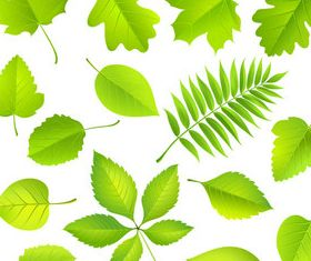 Green leaves set 3 vector