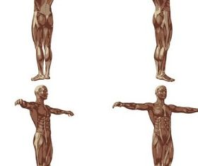 Human Body Anatomy design vector