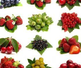 Different Berries free vector