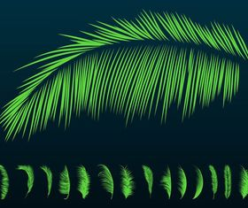 Palm Leaves Silhouettes vector design