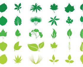 Leaves Graphics vector
