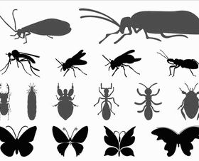 Insects Graphics vector silhouttes