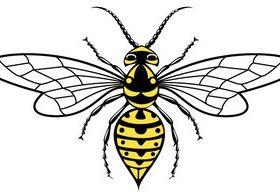 Wasp Image vector