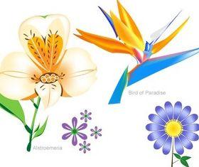 Flowers Free Set vectors