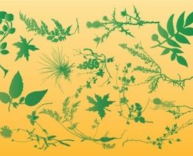 Plants Graphics vector