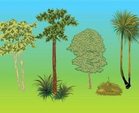Trees Plants vector