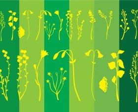 Flower Plants vector
