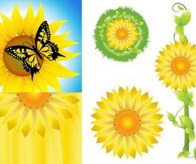 Sunflower Free vectors