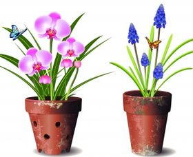 Orchids flower pot Free vector