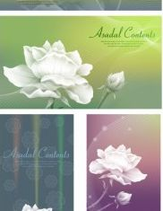 white roses background vector