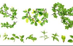material leaves spring vector