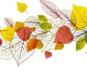 exquisite leaf background 04 vector
