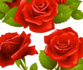 Rose graphic design vectors