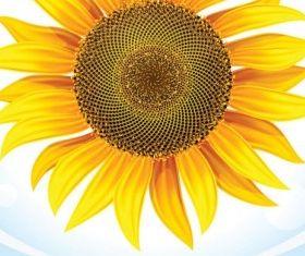 sunflower 05 vectors graphic