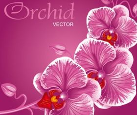 beautiful flowers background 01 vector